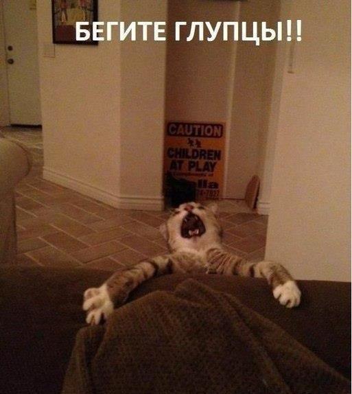 Улыбниська. фото