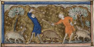 Мужчины сбивают желуди для свиней