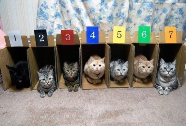Причина по которой кошачьи бега непопулярны