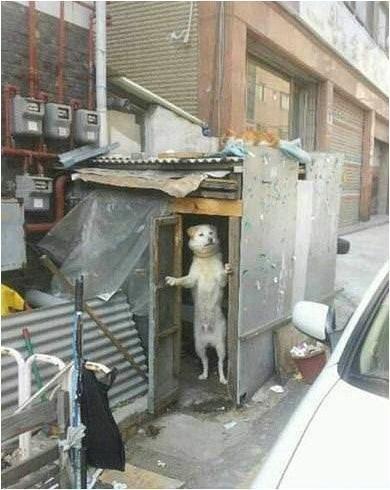 Уникальное фото. В Мытищах собака открыла ларек и торгует чебуреками. Также, в Мытищах пропали пятеро мужчин корейской национальности.