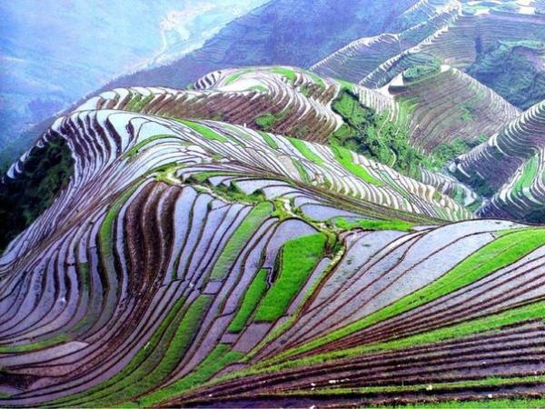 Рисовые терассы2
