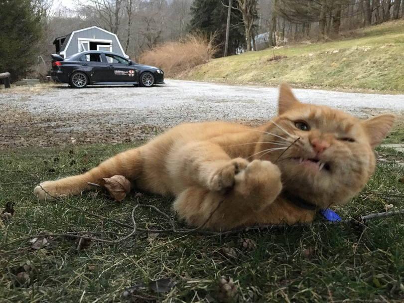 Кот–связист под шквальным огнем восстанавливает поврежденные вражеским снарядом провода