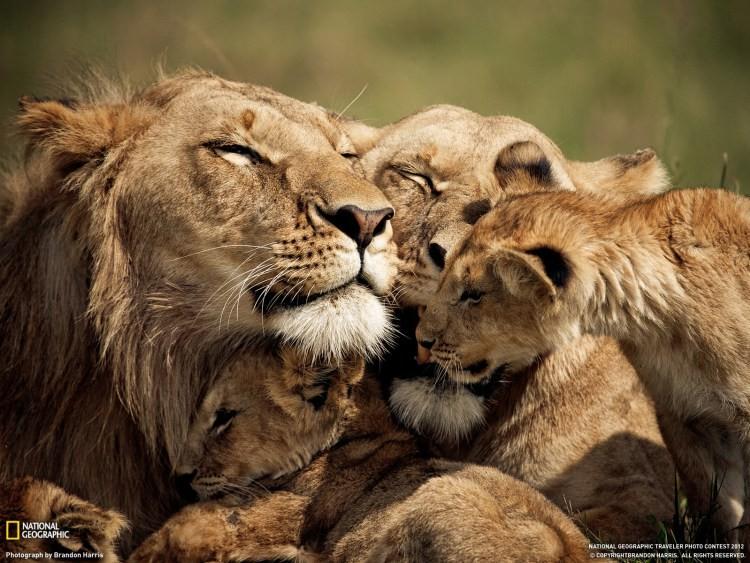 семейные ценности в мире животных