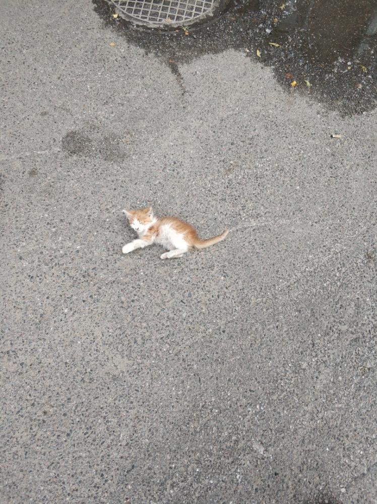 Спасение котенка, съеденного блохами, или как не поехать купаться в воскресенье