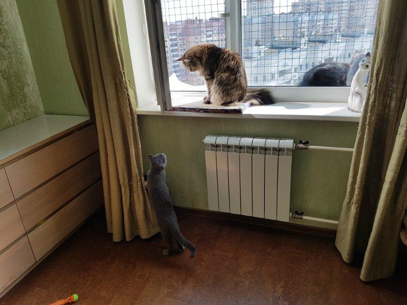 Выгул во все окно