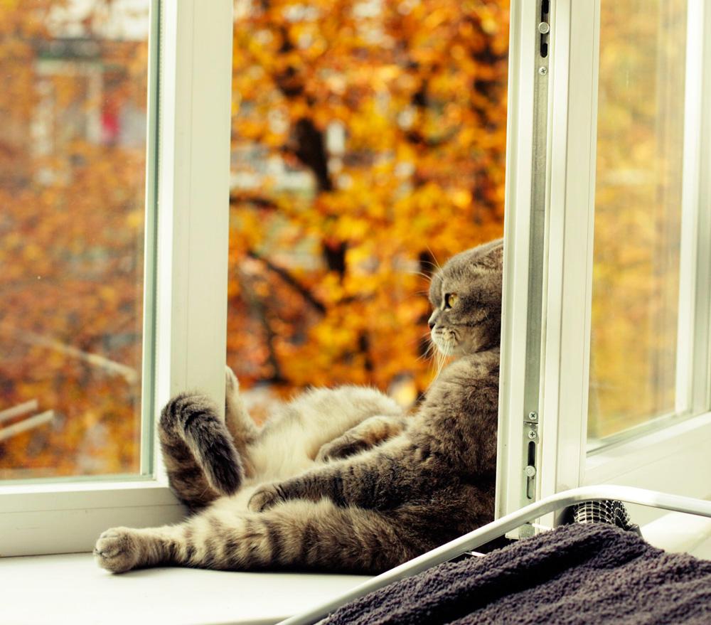 Кот на окне5