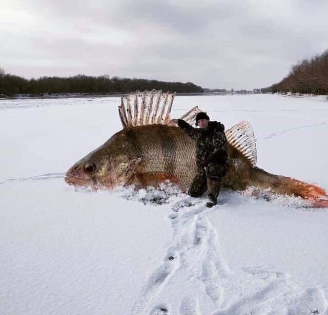 Как правильно фотографировать пойманную рыбу