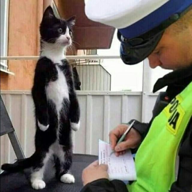 Кот и полицай