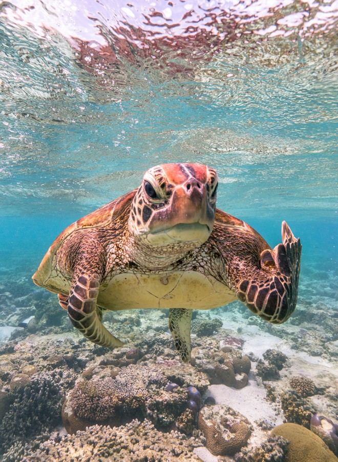 0 черепаха