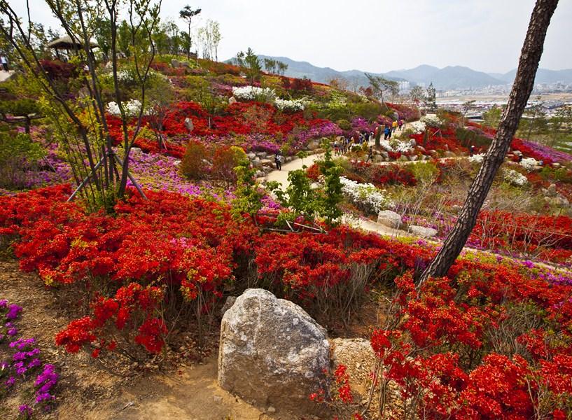 Цветы-Корея-12_Сж