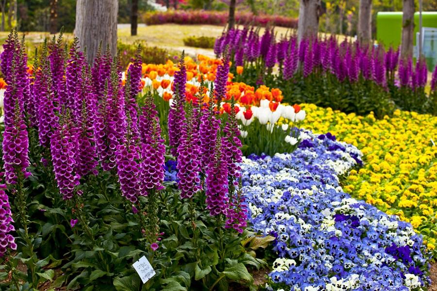 Цветы-Корея-19_Сж