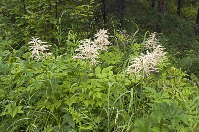 национальный парк забайкальский цветы и цветки