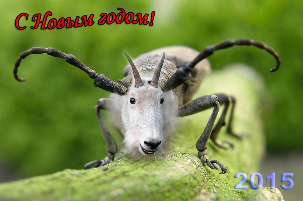 год-козы2015