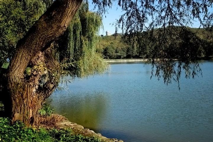 Ива над озером