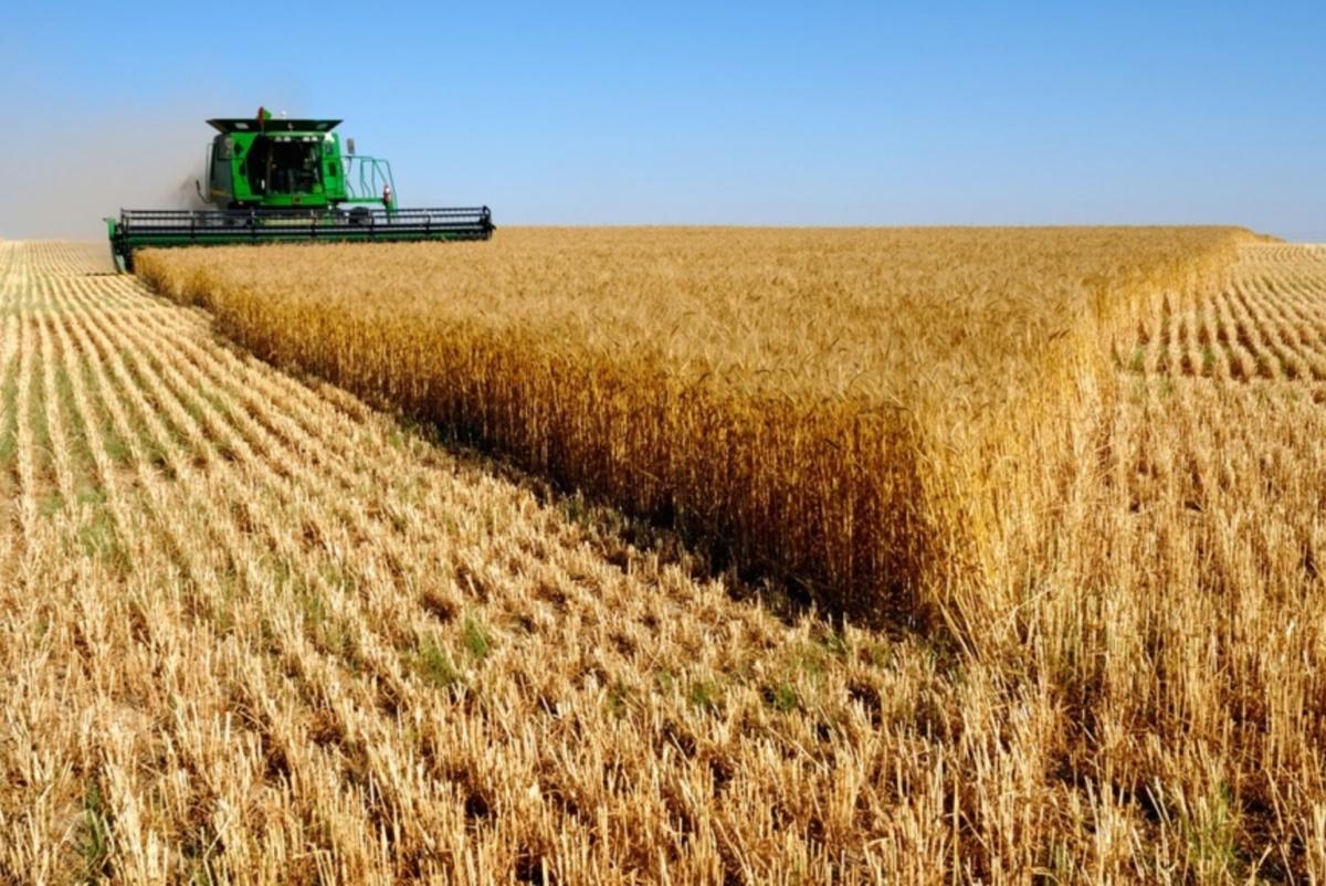 Пшеница дороже нефти, худший кризис за 100 лет и готовность к нефтяной войне