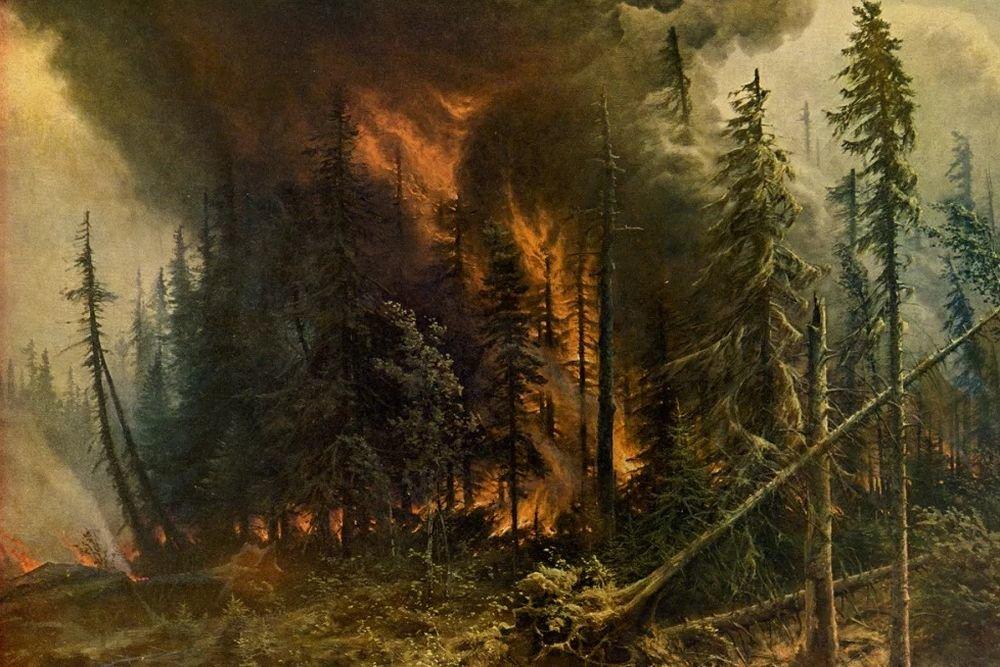 Погубит ли углеродный налог Россию, экологичная вырубка леса и полезные лесные