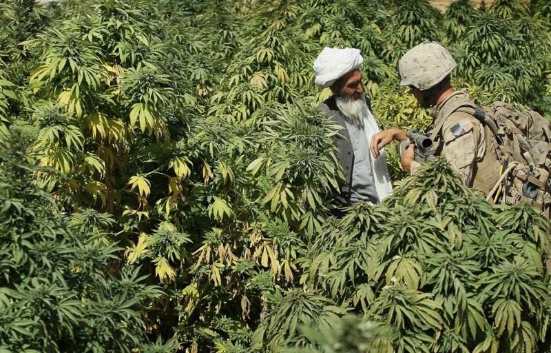 Во время патрулирования территории недалеко от базы Зеербрюгге  недалеко от Каяки, Афганистан, капрал Джейк Хоаг допрашивает крестьянина, который зарабатывает на жизнь выращиванием марихуаны
