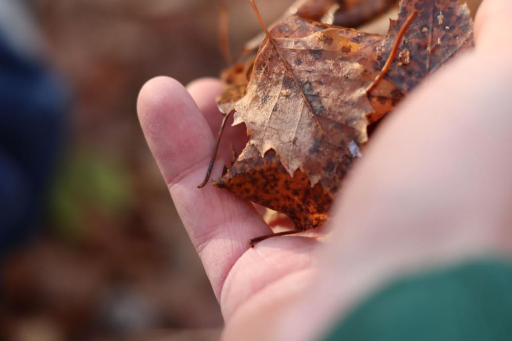 Я тоже был, но сам себя не фотографировал, так что вот вам моя рука, полная унылых осенних листьев.