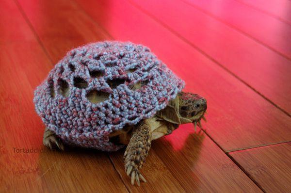 Fun_anim_27_turtle