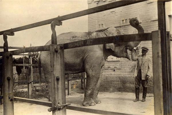 Elephant_Rostov1
