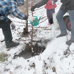 Правда снега у нас нету и +10°, но блин, ЗИМА же!!!