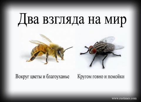 156691_523673374328108_1875714572_n