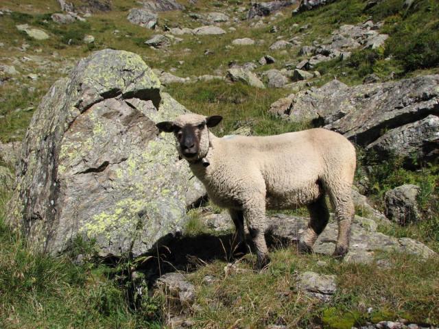 Животные швейцарии деньги во франции название