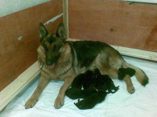 Венька со щенками
