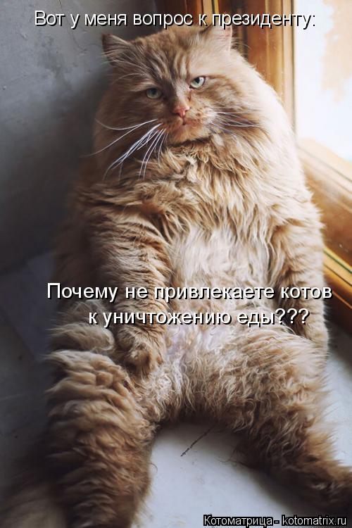 kotomatritsa_3w