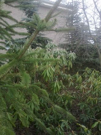 родики в лесу