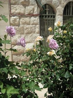 Розы Палестины
