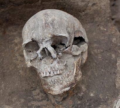 черепа3