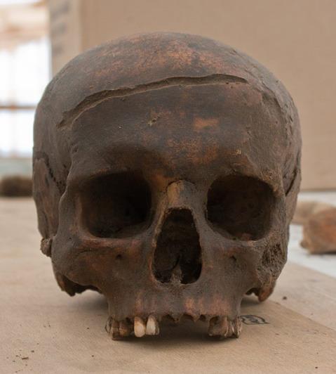 черепа4