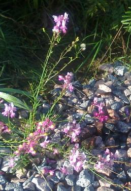 орхидейки2