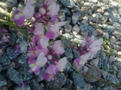 Орхидейки 2 серия
