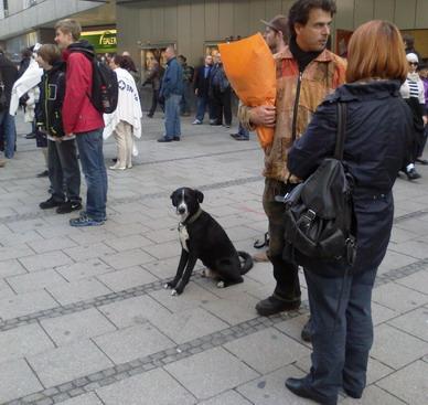 Собака тоже в очереди дежурит