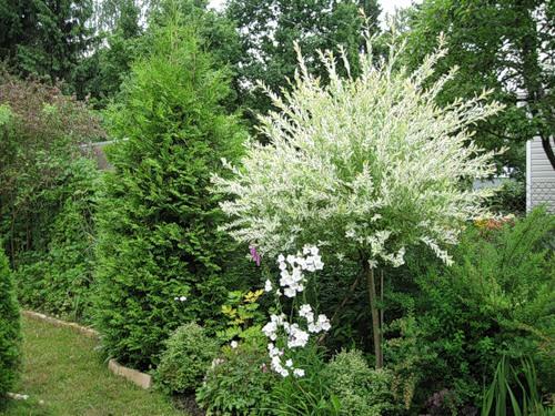 Ольга и Зеленые руки - Светящиеся растения