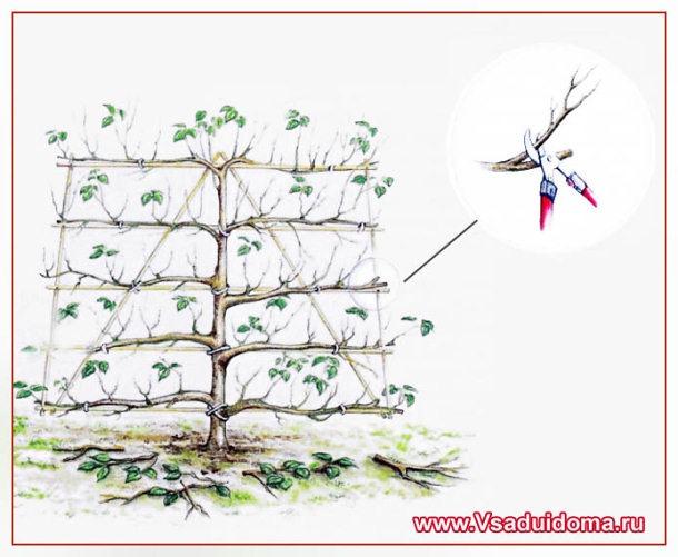 Шпалера для яблони своими руками