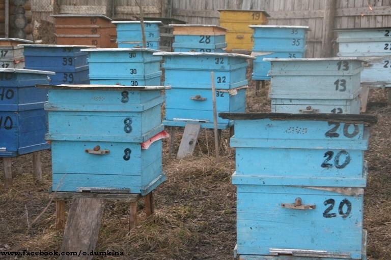 Пасека Пересадка пчёл (2)