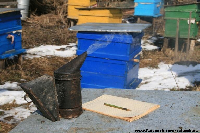 Пасека Пересадка пчёл (3)