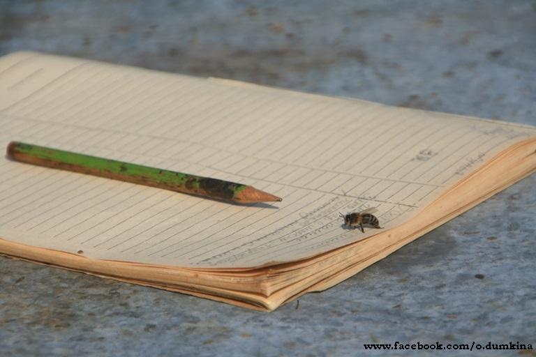 Пасека Пересадка пчёл (4)