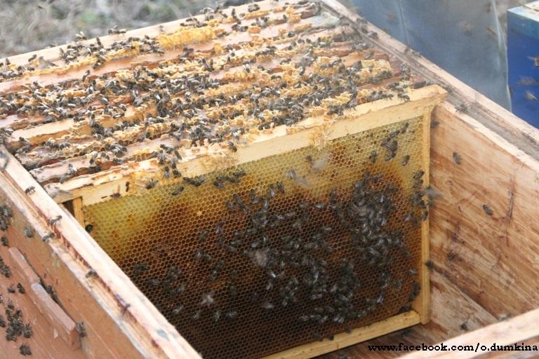 Пасека Пересадка пчёл (6)