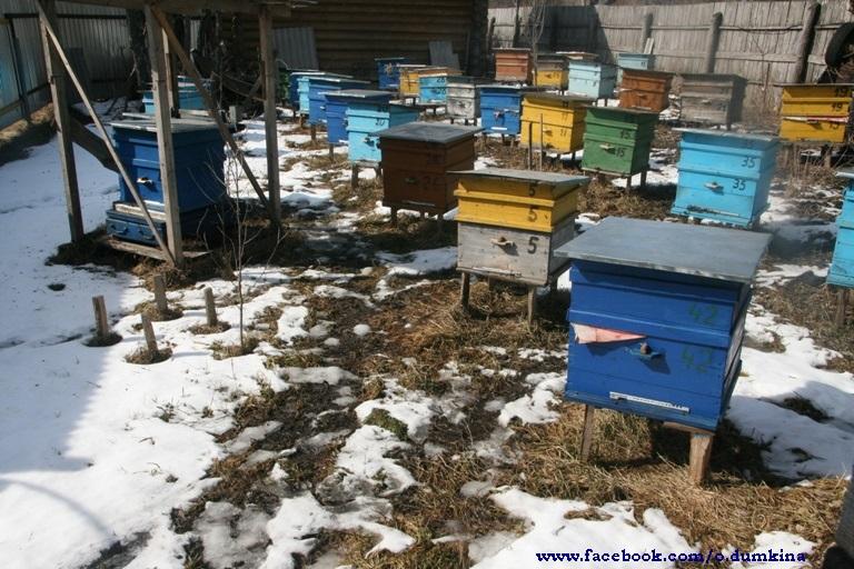 Пасека Пересадка пчёл (9)