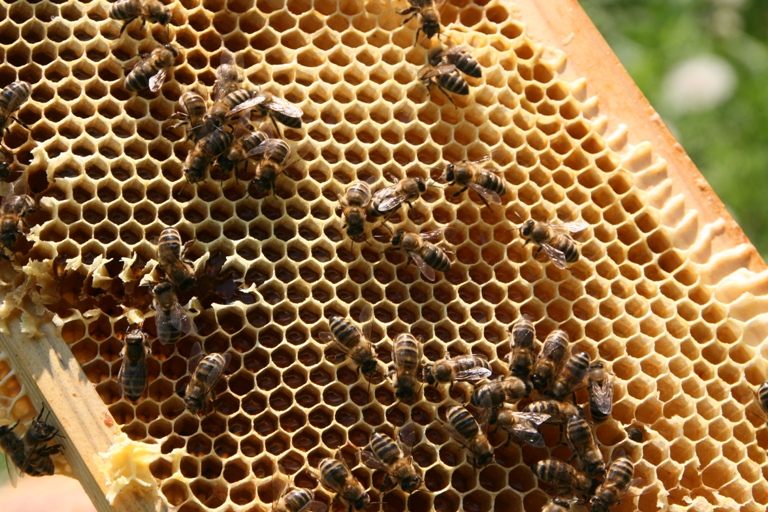 Мёд со своей пасеки1