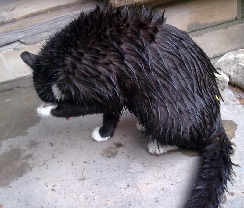 Мурзя дощ
