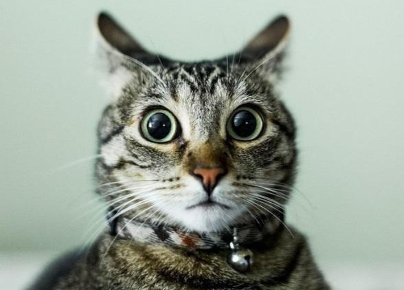 кіт  у шоці