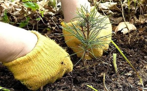 Саджаємо ліс