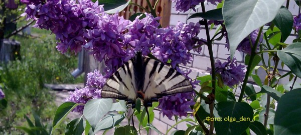 Метелик 2