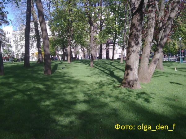 Газон у парку 1