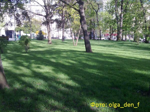 Газон у парку 3